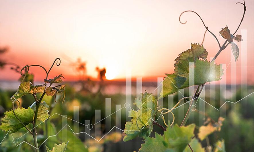 WineDex© - Tous les indices iDealwine sur le vin